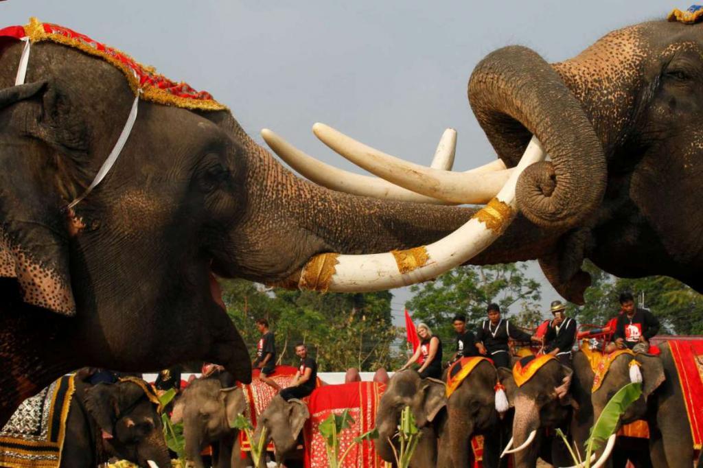 Elephants on holiday
