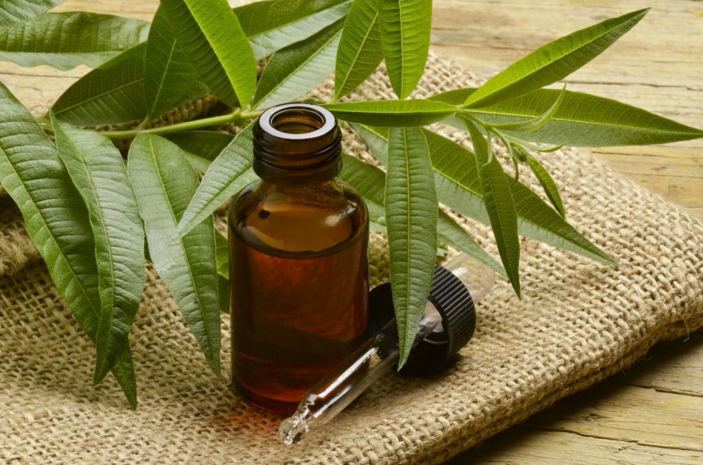 Как сделать масло чайного дерева 734