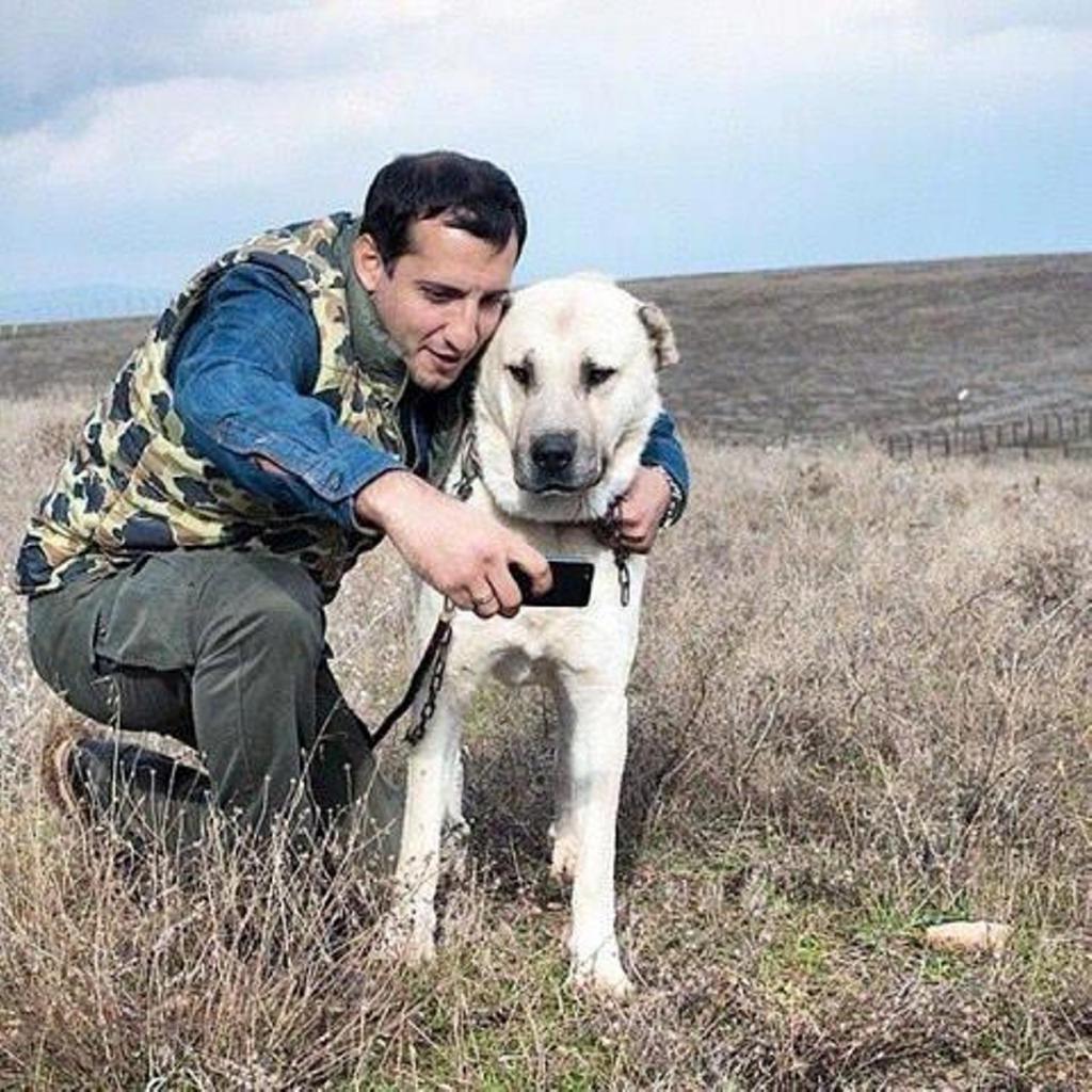 breed armenian wolfhound