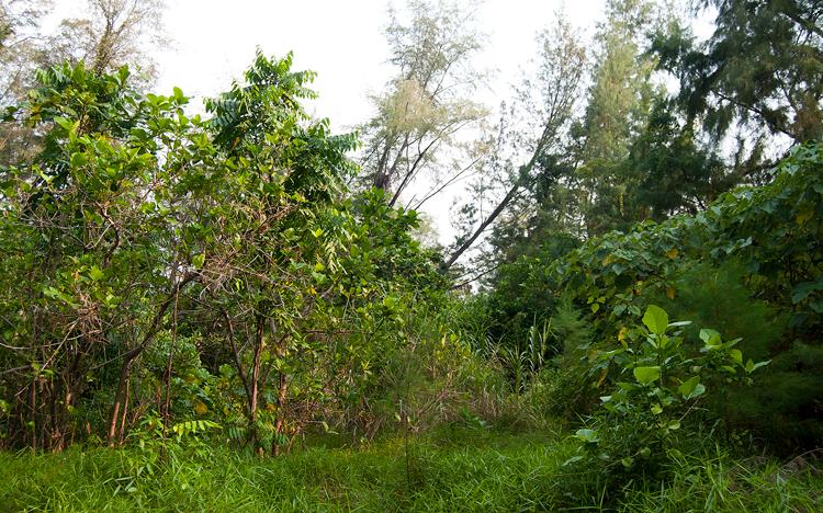 Растительность Кракатау