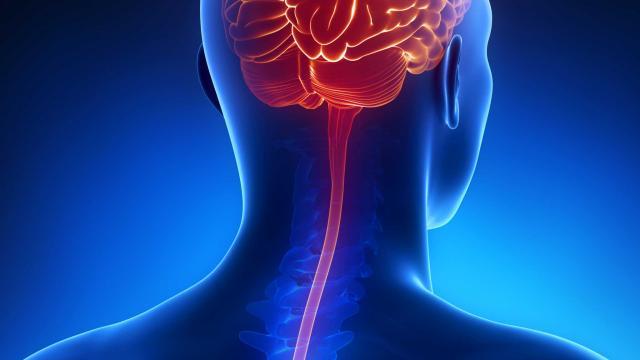 бактериальный менингит как передается