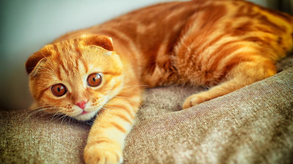 Orange cats day symbol