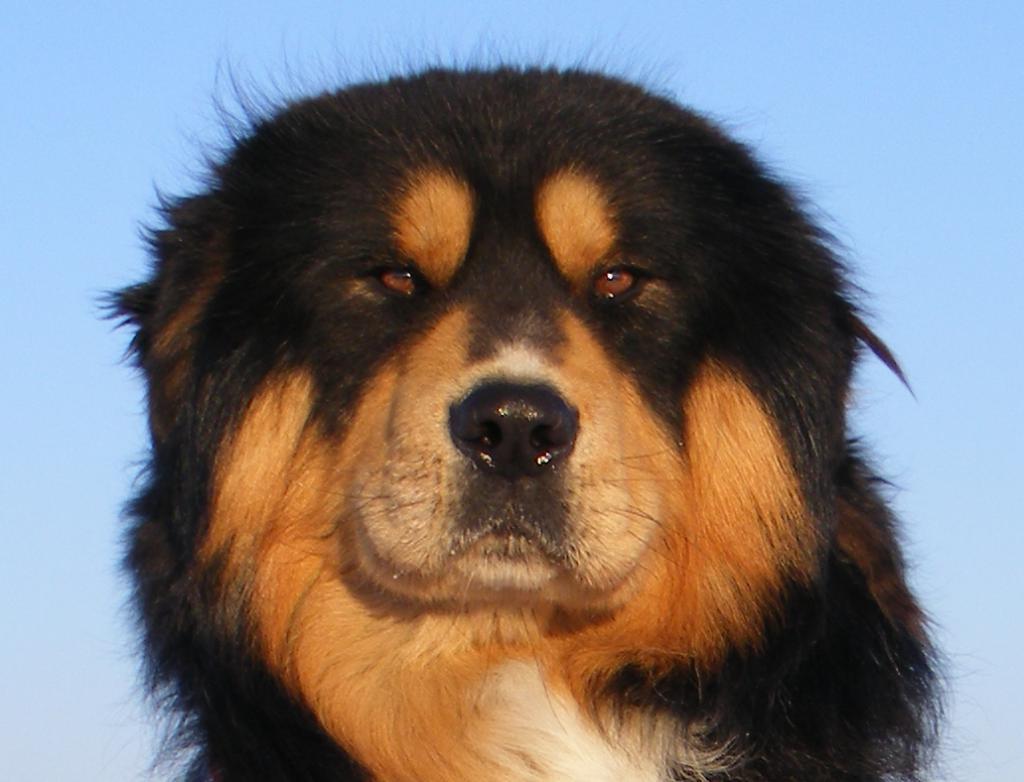Buryat-Mongol Wolfhound Kennel