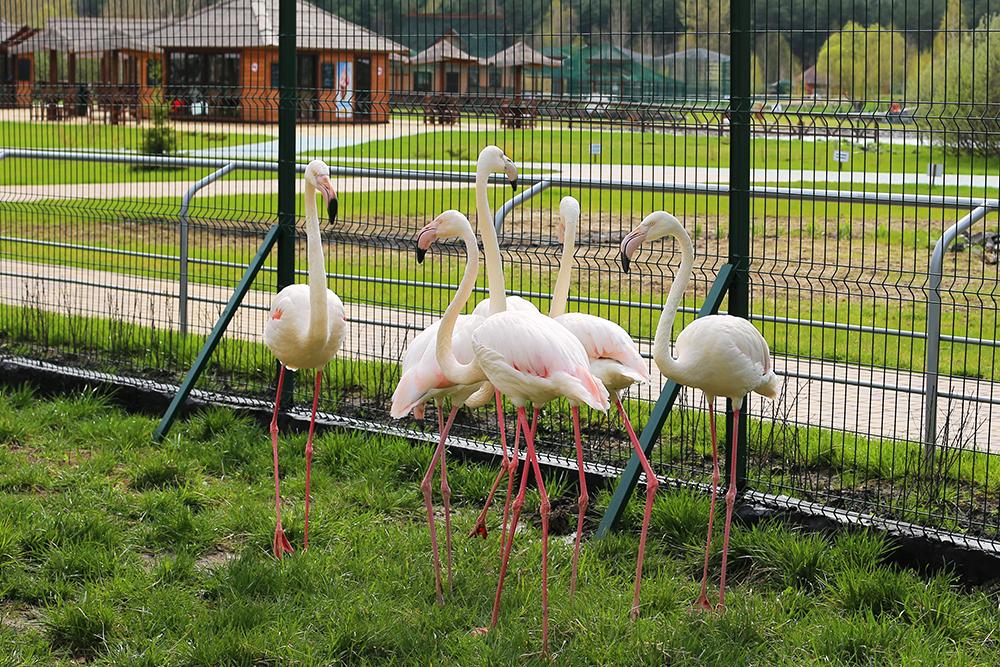 Inhabitants of the Belgorod Zoo