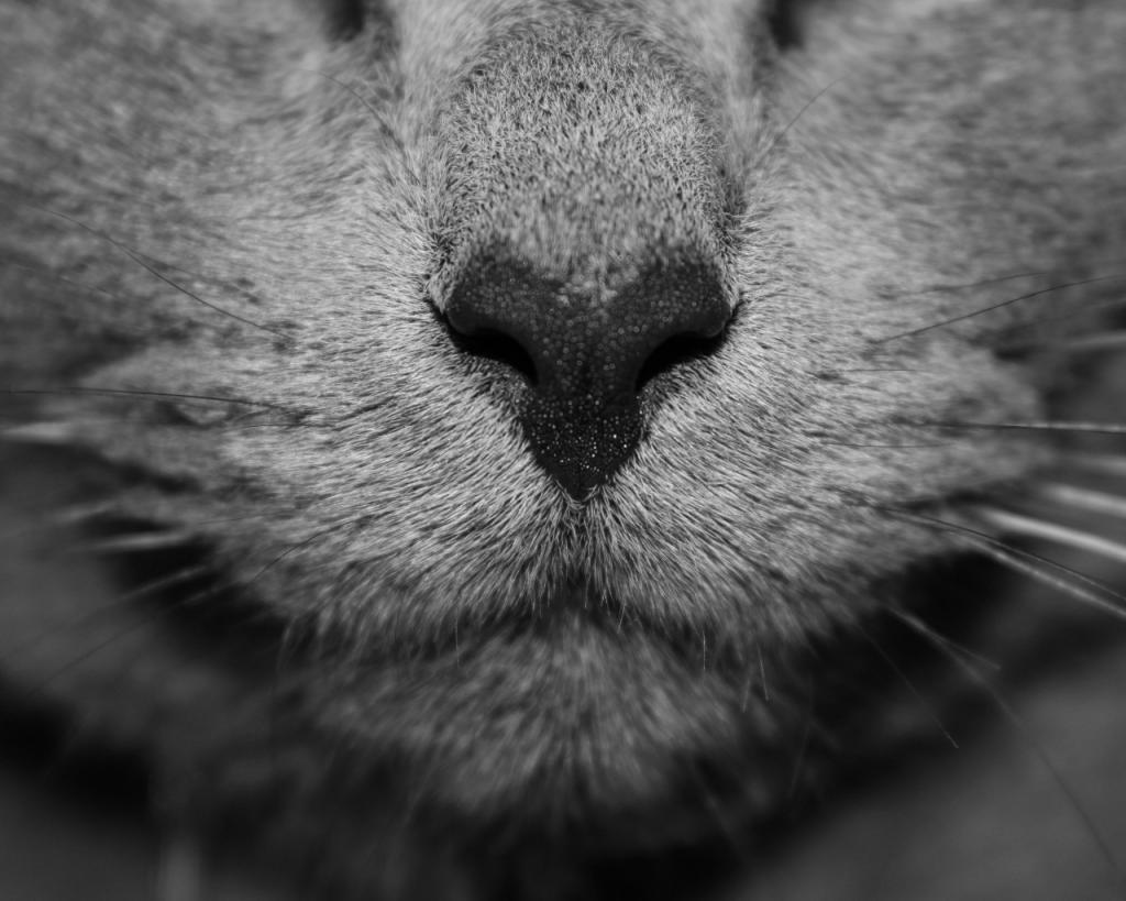 Сухой кошачий нос
