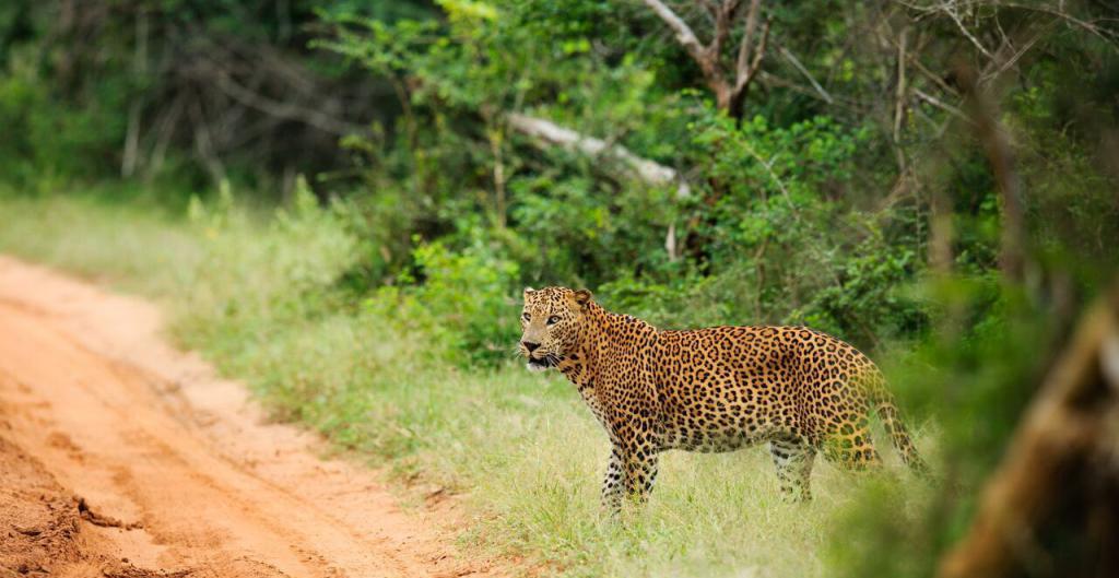 Sri Lanka Nature Reserve