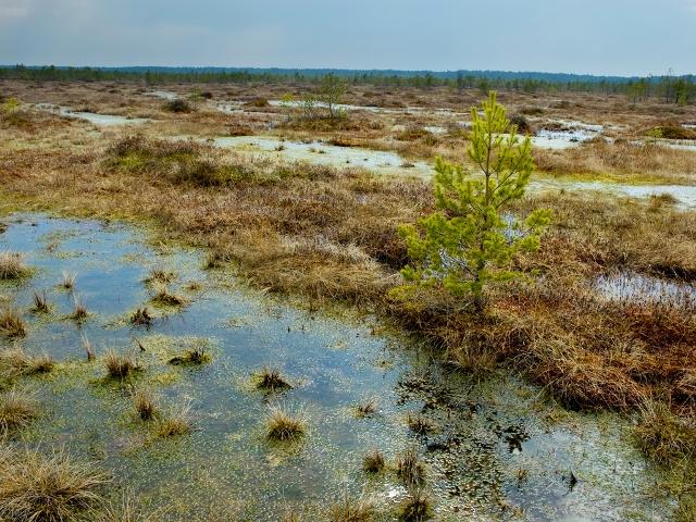 Многочисленные болота заповедника