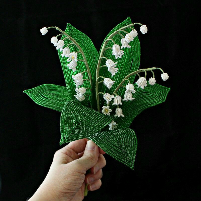 Wide foliage of lily of the valley.
