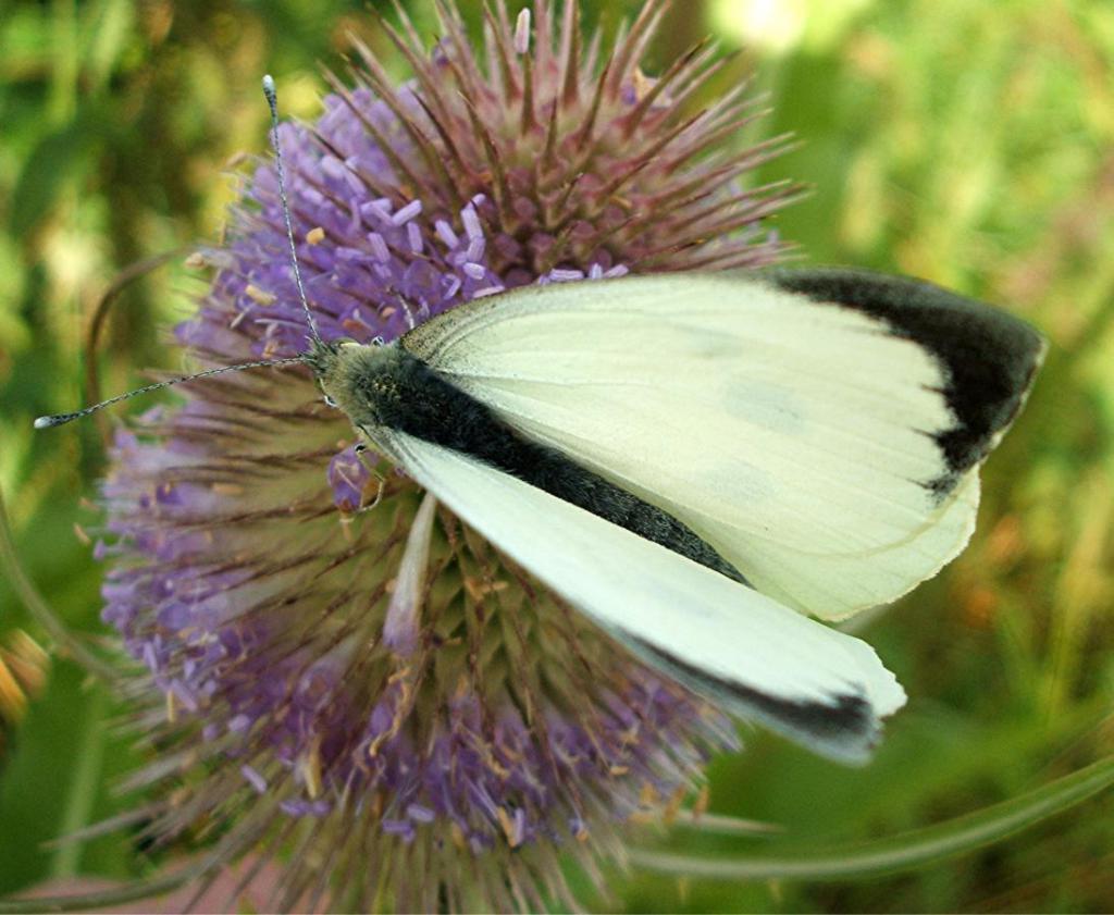 бабочка в повседневной жизни