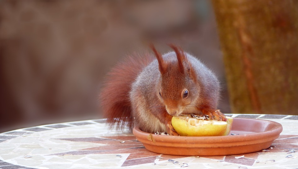 What eats squirrel in the forest?