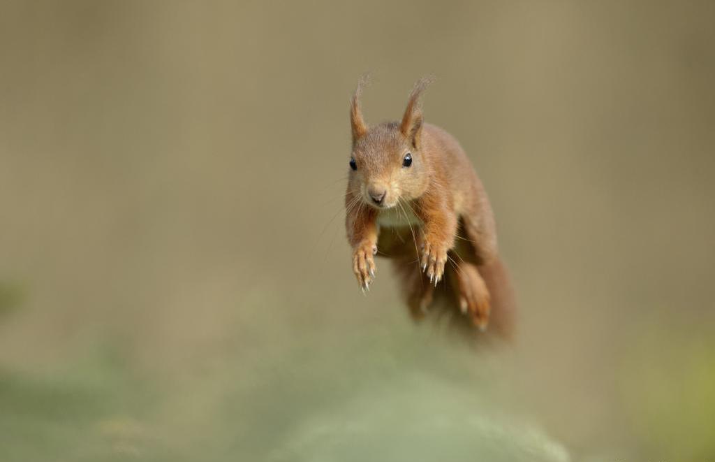 Animal squirrels