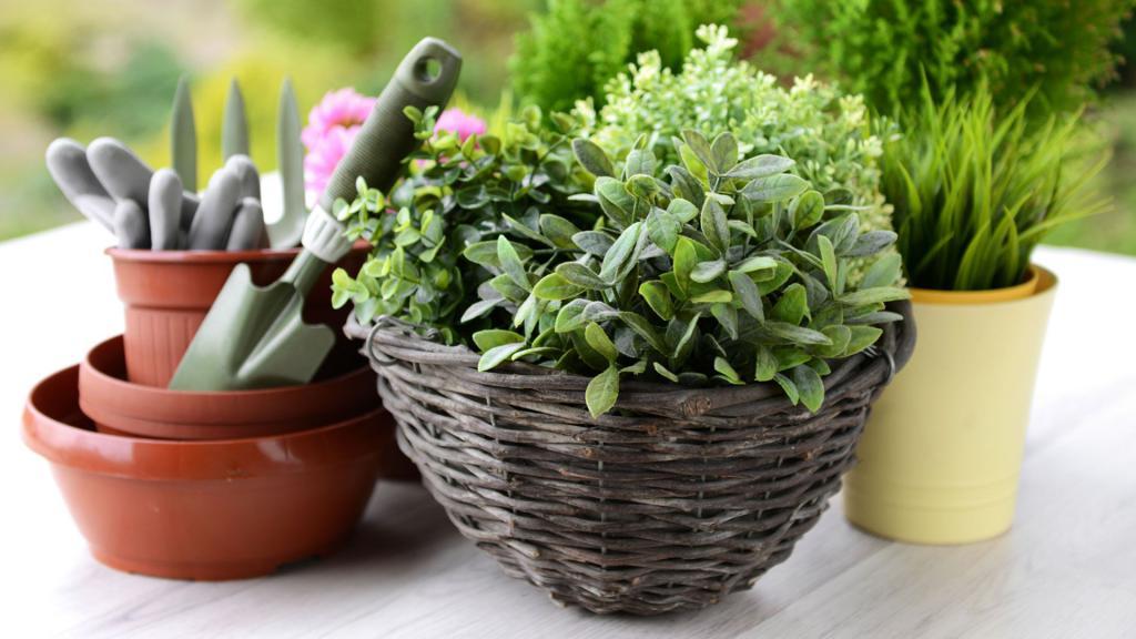 Choosing a flower pot