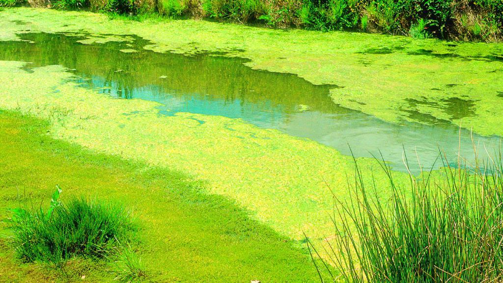 цветение воды от водорослей