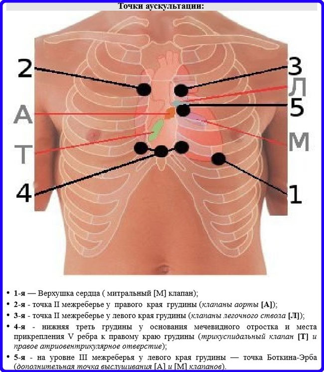 auscultation points