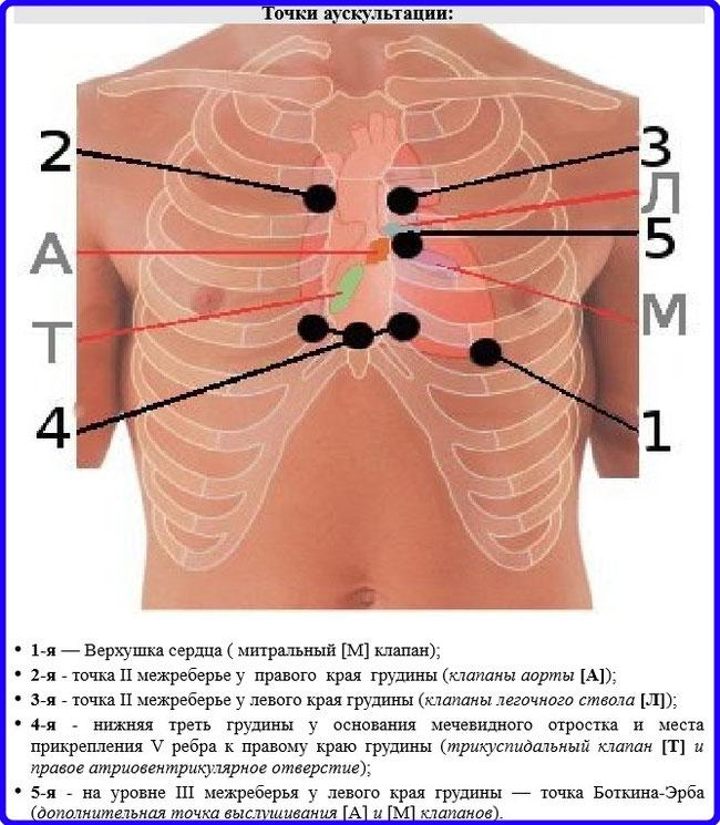 Аускультация сердца: точки выслушивания, методика проведения и ...
