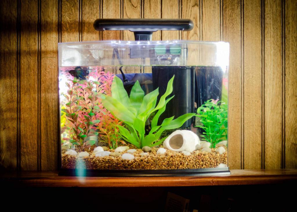 раздвижных как красиво обустроить аквариум фото постоянно куда-то