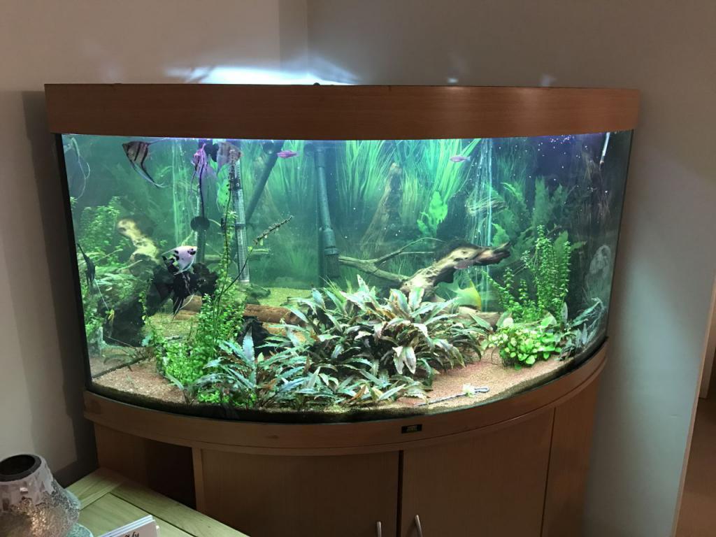 аквариум фото для дома килт ассоциируется