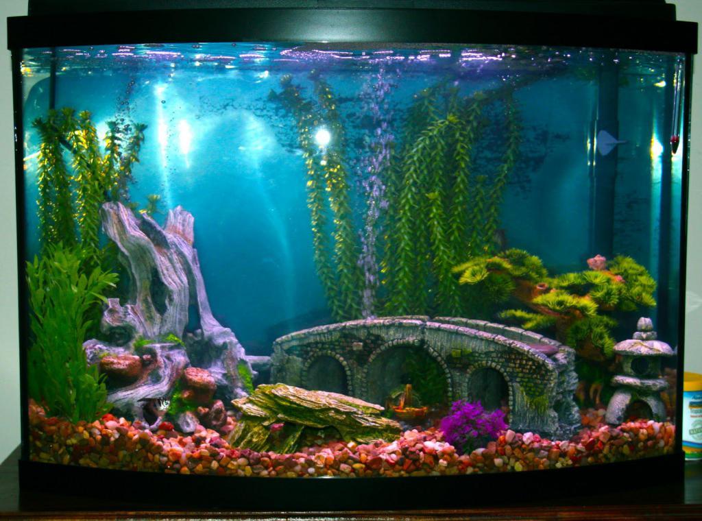читателям картинки декорации в аквариум оформить помещение