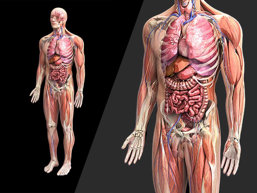 Организма человека картинка