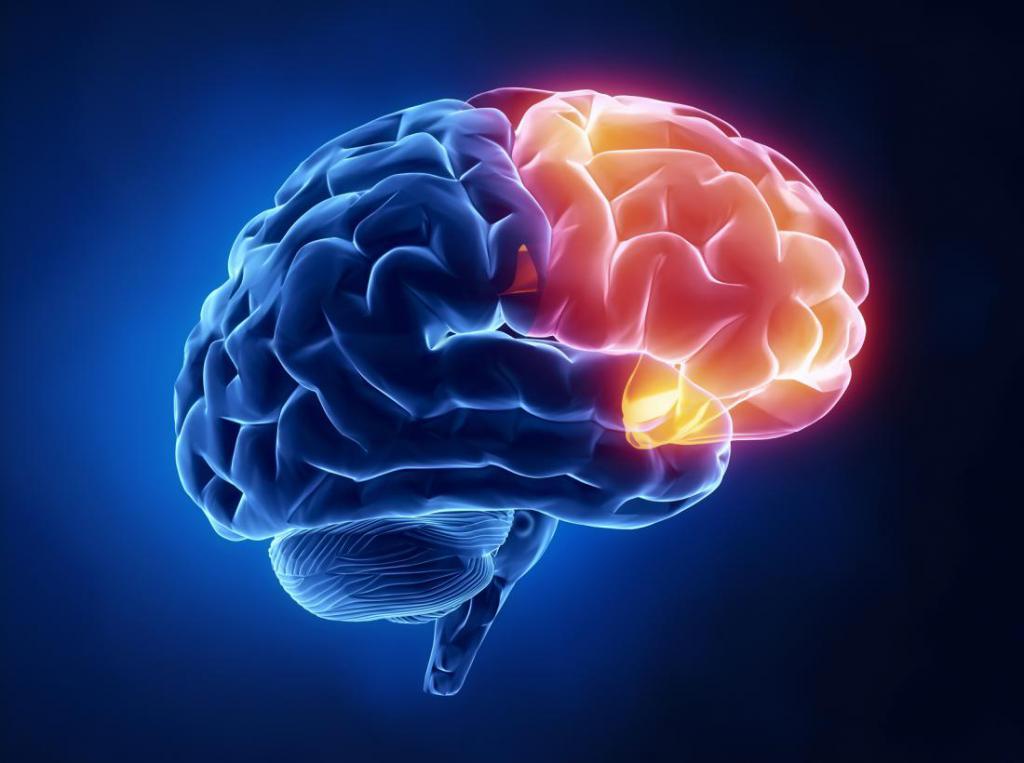 районе мозг центры картинки искового заявления