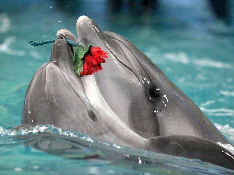 Картинки дельфины любовь