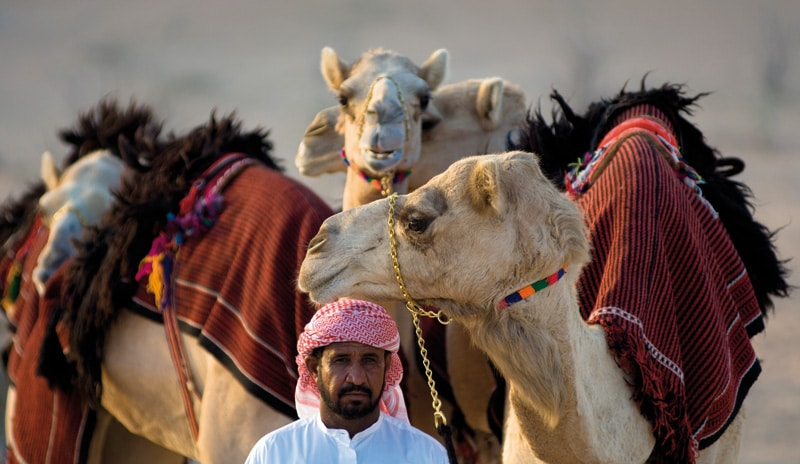 Arab with camels