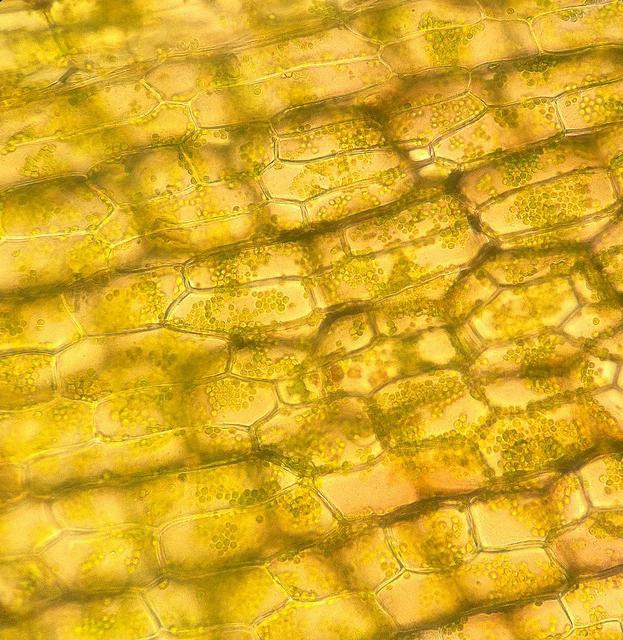 Строение животной клетки строение и