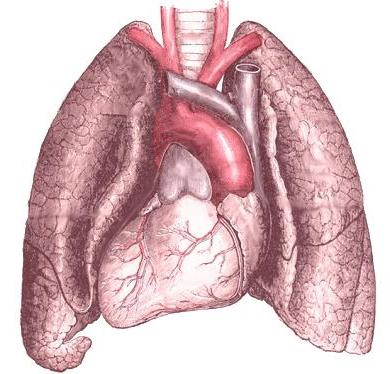 fluid in the lungs