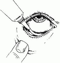 конъюнктивальный мешок глаза на картинке