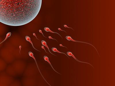 fertility period