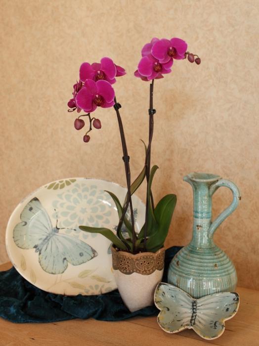 Как ухаживать за орхидеей дома, выращивание орхидей