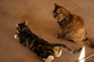 Что делать кошка орет просит кота