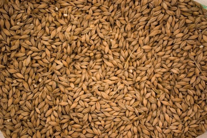 Брага из зерна в домашних условиях