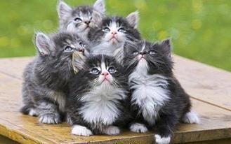 Sleep kittens