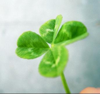 Как притянуть удачу