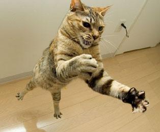 как заставить кота пить от глистов