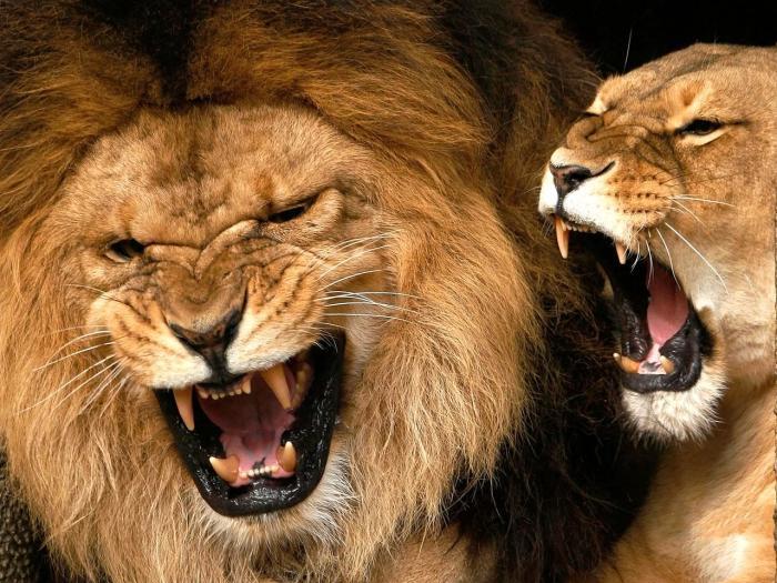 как вернуть мужчину скорпиона льва