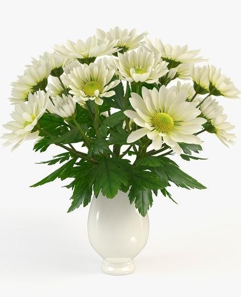 как сохранить хризантемы в вазе
