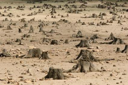 последствия вырубки лесов