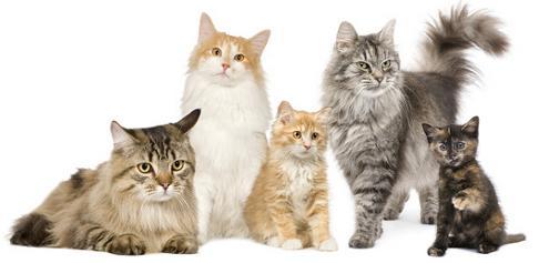 Имена для кошек девочек | Сайт «Мурло»