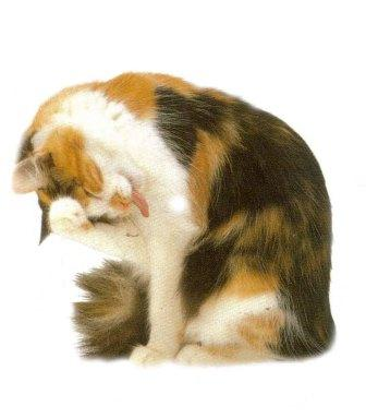 Почему у кошки текут слюни?