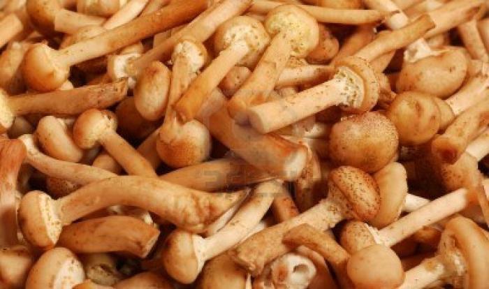 салат грибная полянка с опятами рецепт с ветчиной