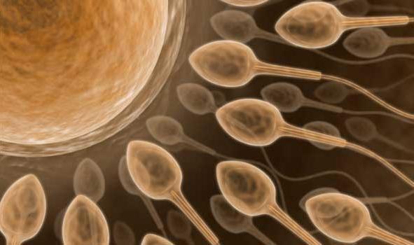 Беременность от смазки мужской