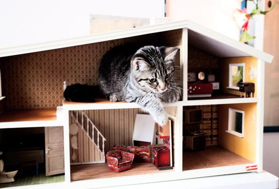 house for cats do it yourself
