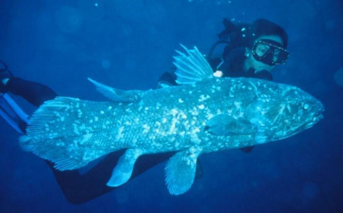Рыба нототения – ценный продукт питания :: SYL.ru Латимерия
