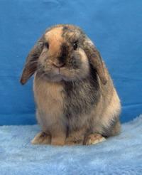 Сколько живут кролики и от чего это зависит