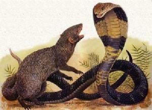 очковая змея фото