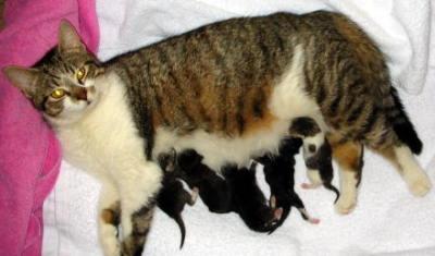 Сколько кормить котенка