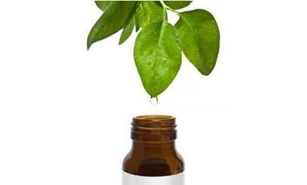 Масло чайного дерева и его лечебный