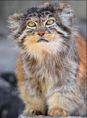 Лесные животные внесенные в Красную книгу России фото и